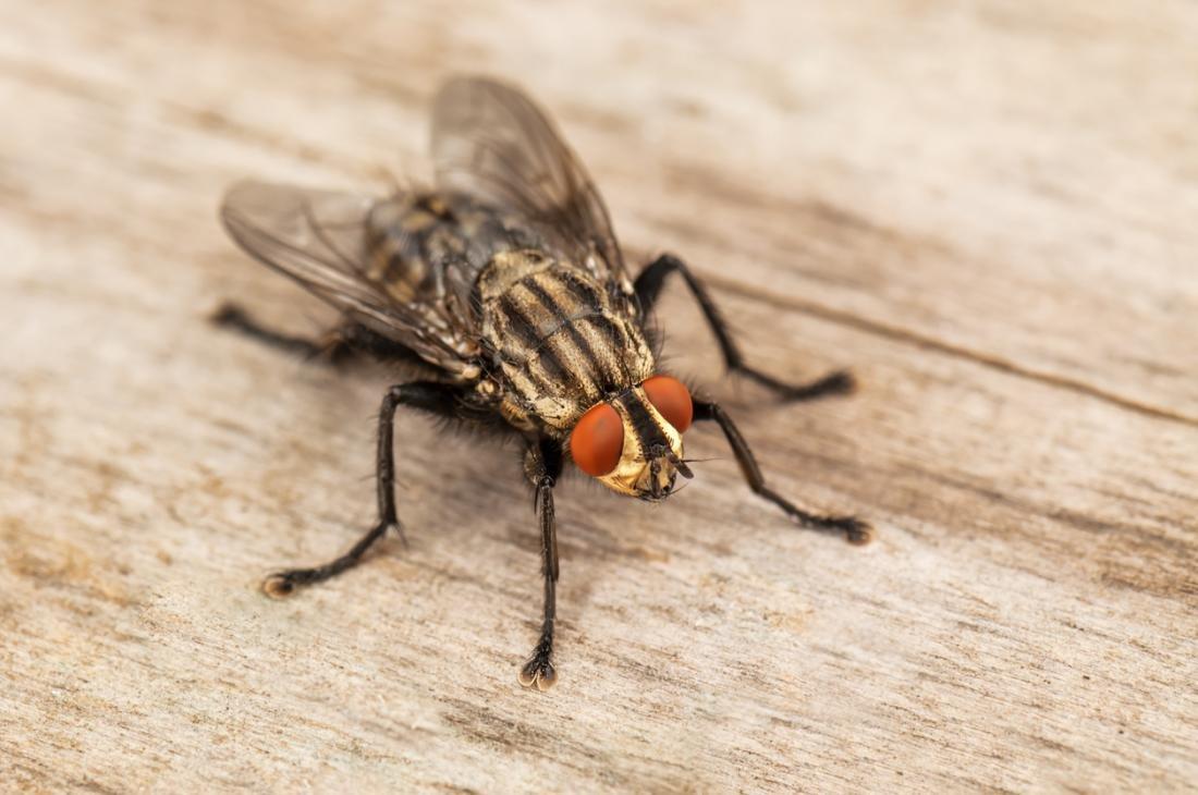 شركة مكافحة حشرات الذباب