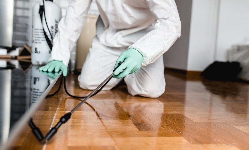 رش مبيدات حشرية في أبو ظبي