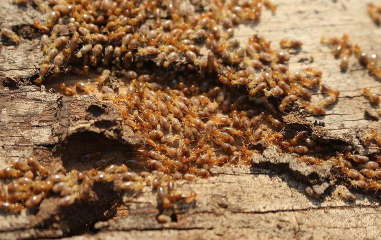 شركة مكافحة حشرات الرمة في أبو ظبي