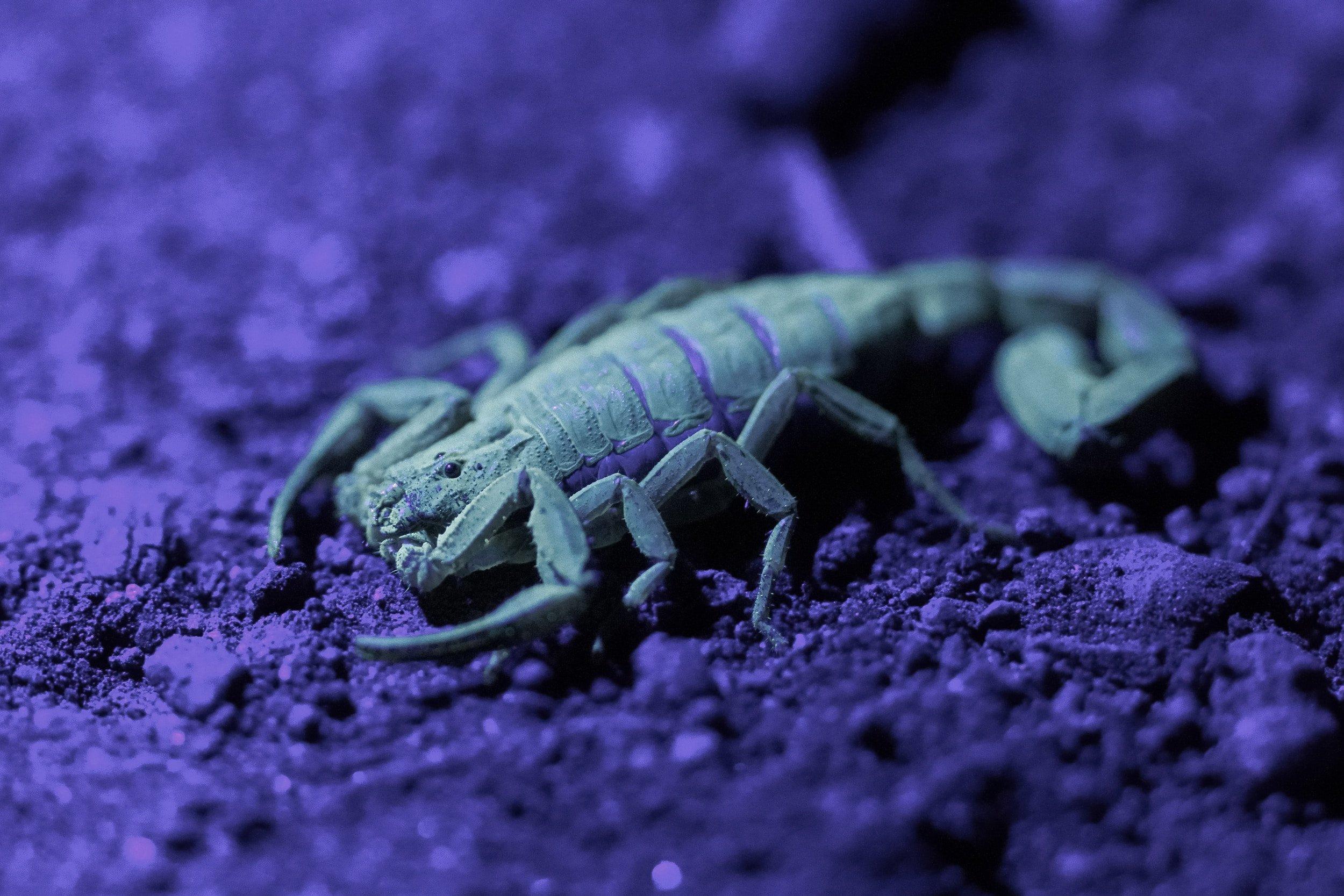 شركة مكافحة حشرات العقارب