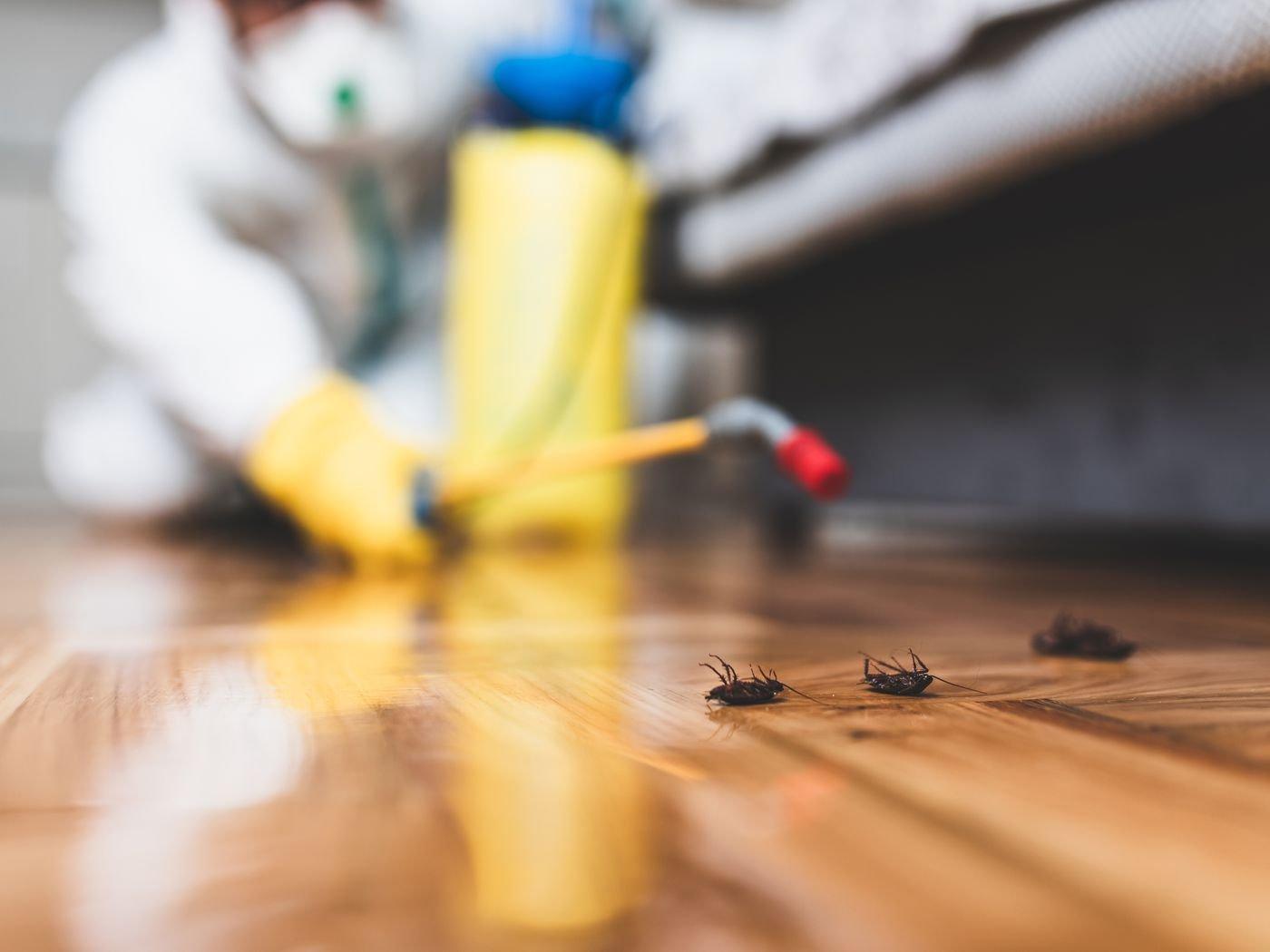 شركة مكافحة حشرات السوس في الباهية أبو ظبي