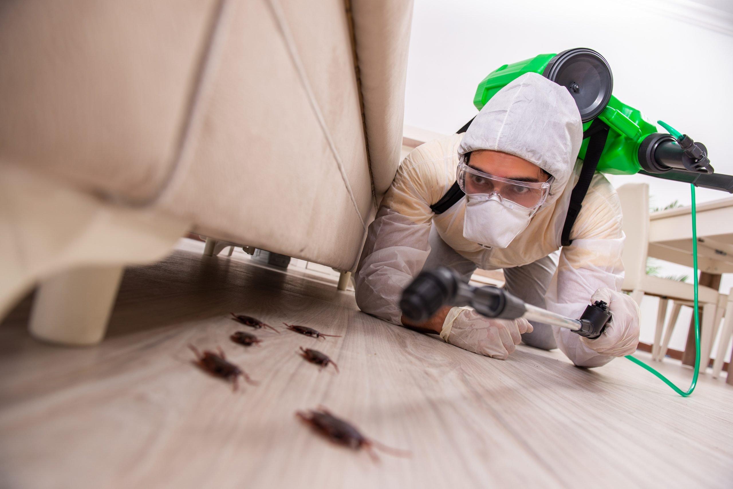 شركة مكافحة حشرات في السمحة أبو ظبي