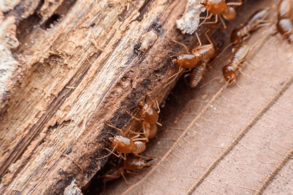 شركة مكافحة حشرات الرمة في الرحبة أبو ظبي