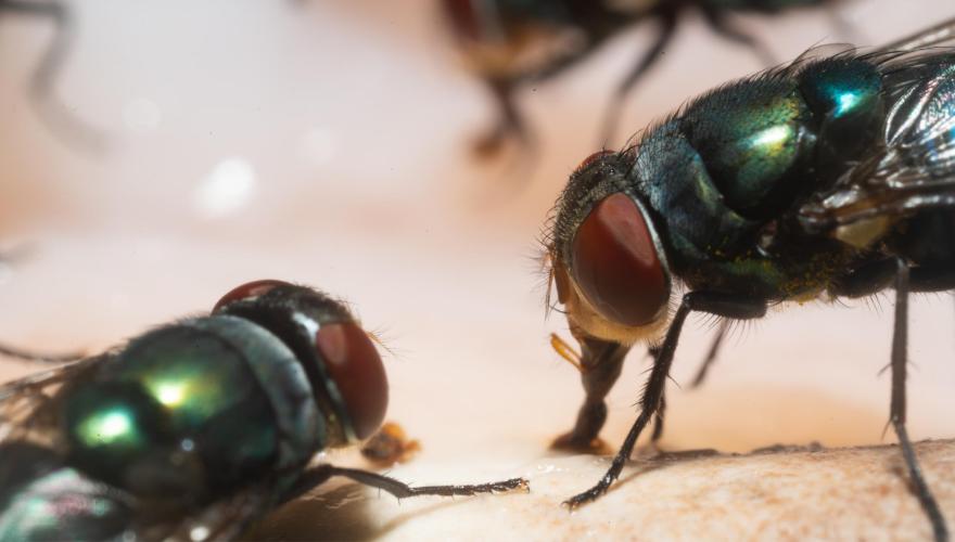 شركة مكافحة حشرات الذباب في المرور أبو ظبي