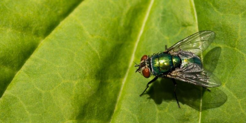 شركة مكافحة حشرات الذباب في ليوا أبو ظبي