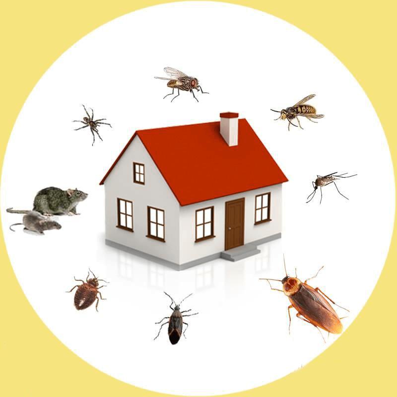 أفضل شركة مكافحة حشرات في غياثي أبو ظبي