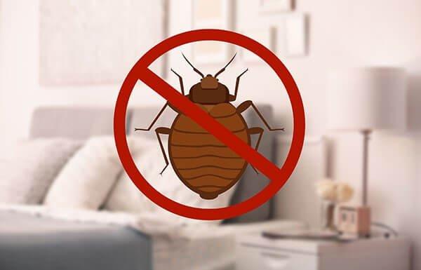 شركة مكافحة حشرات بق الفراش في ساس النخيل أبو ظبي