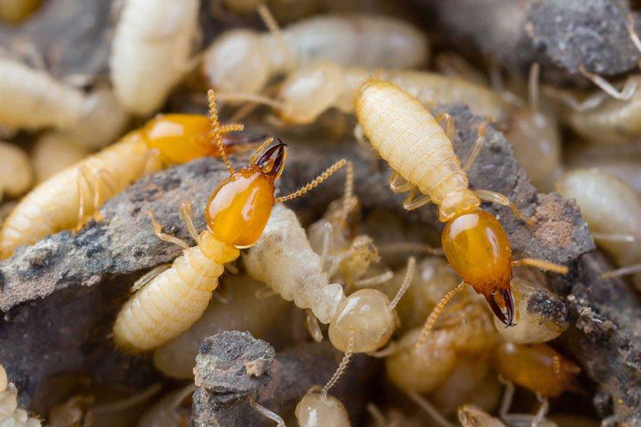 شركة مكافحة حشرات الرمة في ربدان أبو ظبي
