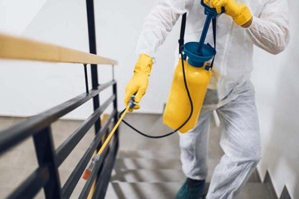 شركة رش مبيدات حشرية في النهضة أبو ظبي