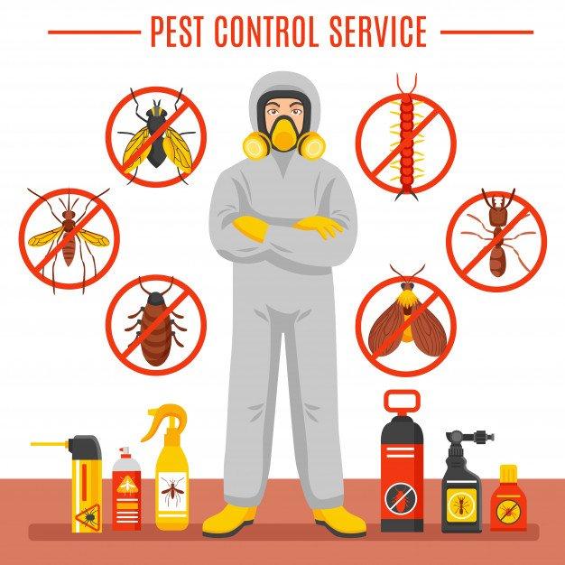 أفضل شركة مكافحة حشرات البراغيث في الختم أبو ظبي