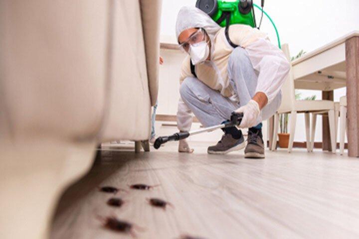 شركة مكافحة حشرات في المقطع أبو ظبي