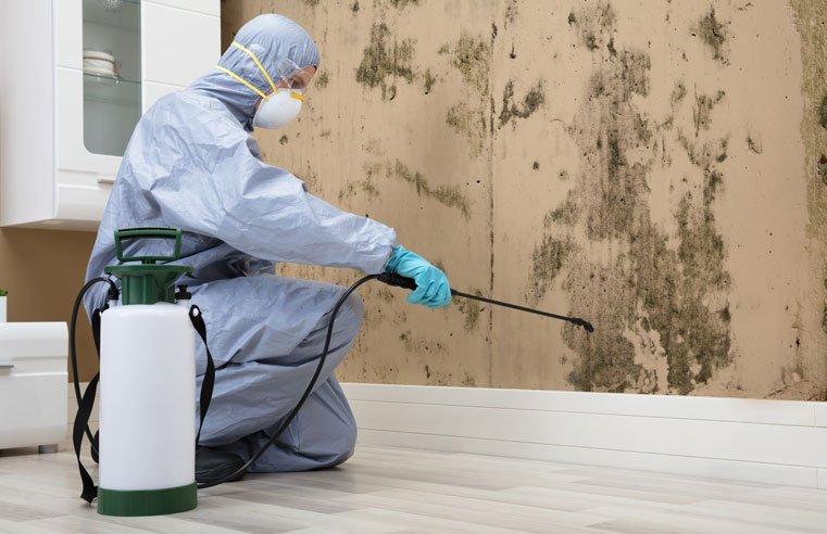 شركة رش مبيدات حشرية في شخبوط أبو ظبي