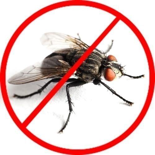 شركة مكافحة حشرات الذباب في ايكاد أبو ظبي