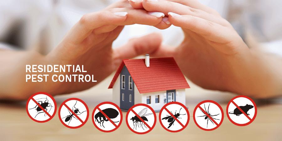 شركة مكافحة حشرات الصراصير في الباهية أبو ظبي