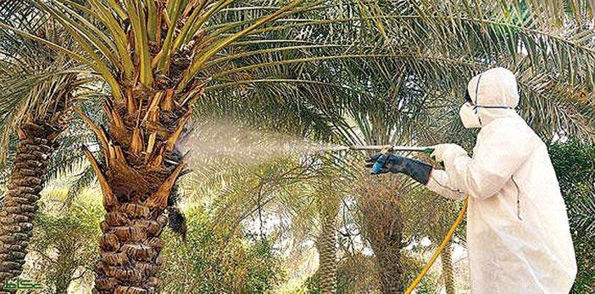 شركة مكافحة حشرات السوس في بني ياس أبو ظبي