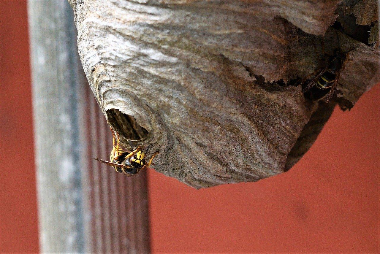 شركة مكافحة حشرات الدبابير في الرويس أبو ظبي