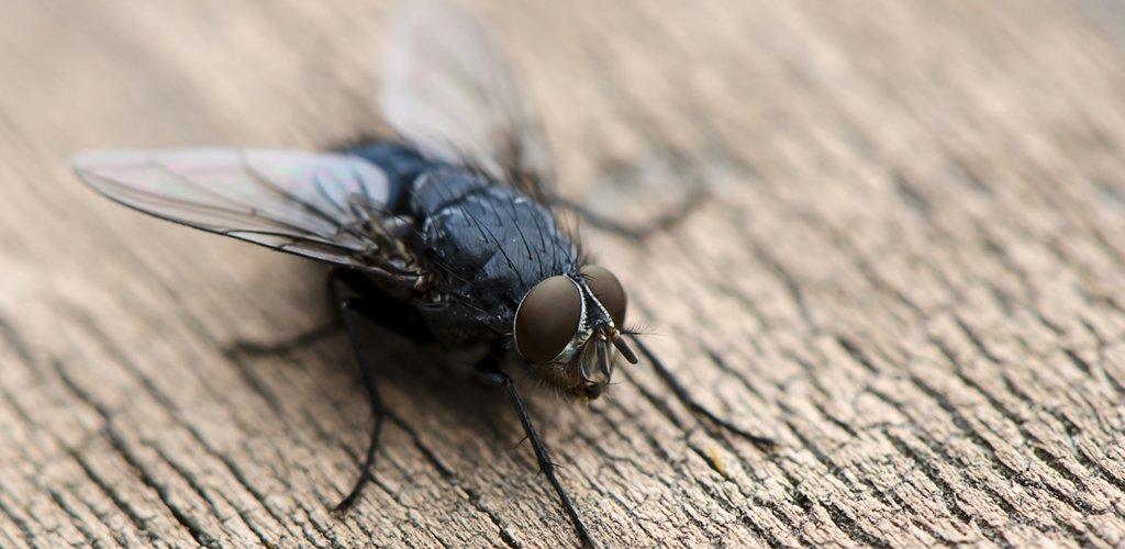 شركة مكافحة حشرات الذباب في المشرف أبو ظبي