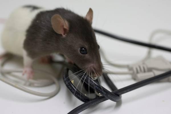 شركة مكافحة الفئران في النهضة أبو ظبي