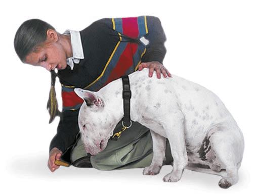 teach dog to go down step 1