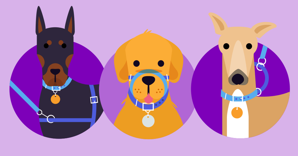 how-to-leash-train-your-puppy-header