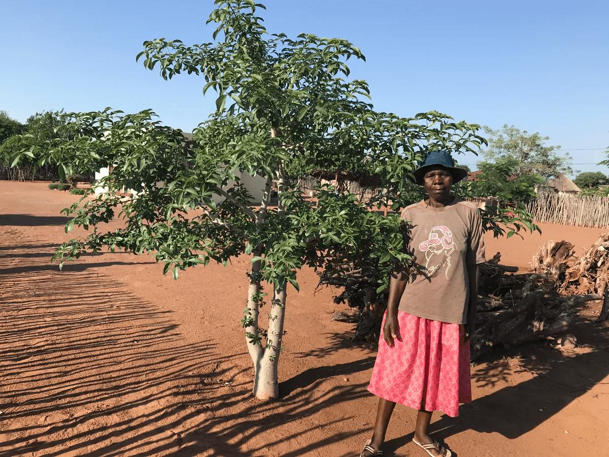 BG2-Baobab-Guardian-Rebecca-Nzenzhelele