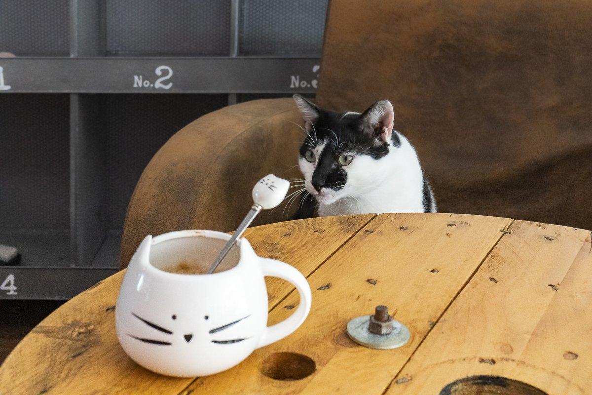 dumundo_eat_cat_coffee_braga_portugal_01