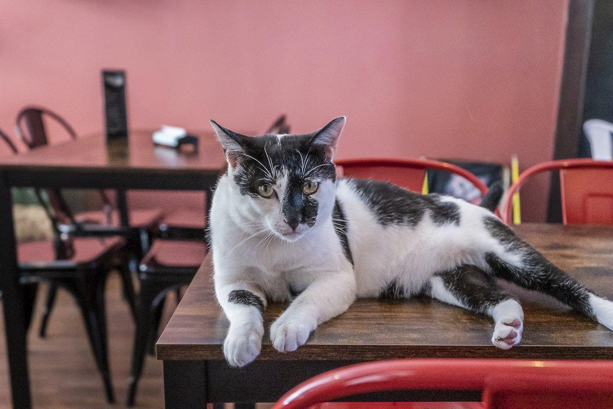 dumundo_eat_cat_coffee_braga_portugal_08
