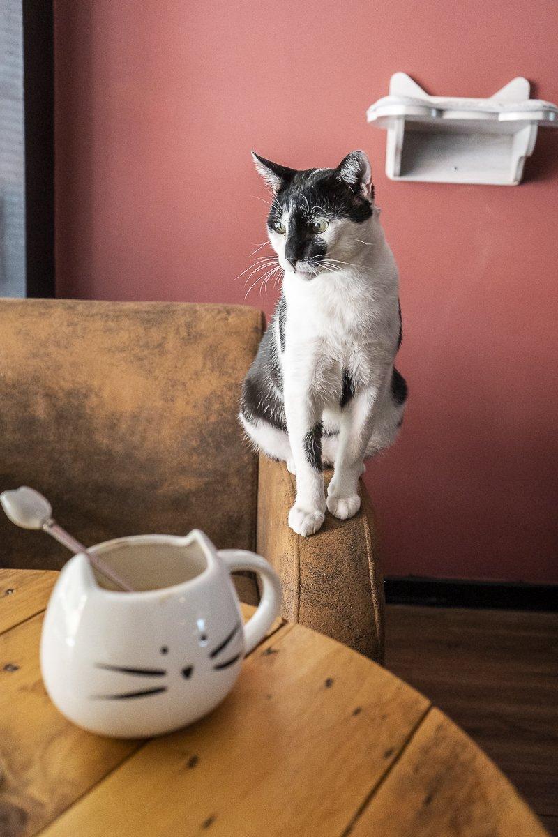 dumundo_eat_cat_coffee_braga_portugal_20