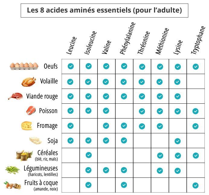 Les acides aminés essentiels pour le sport