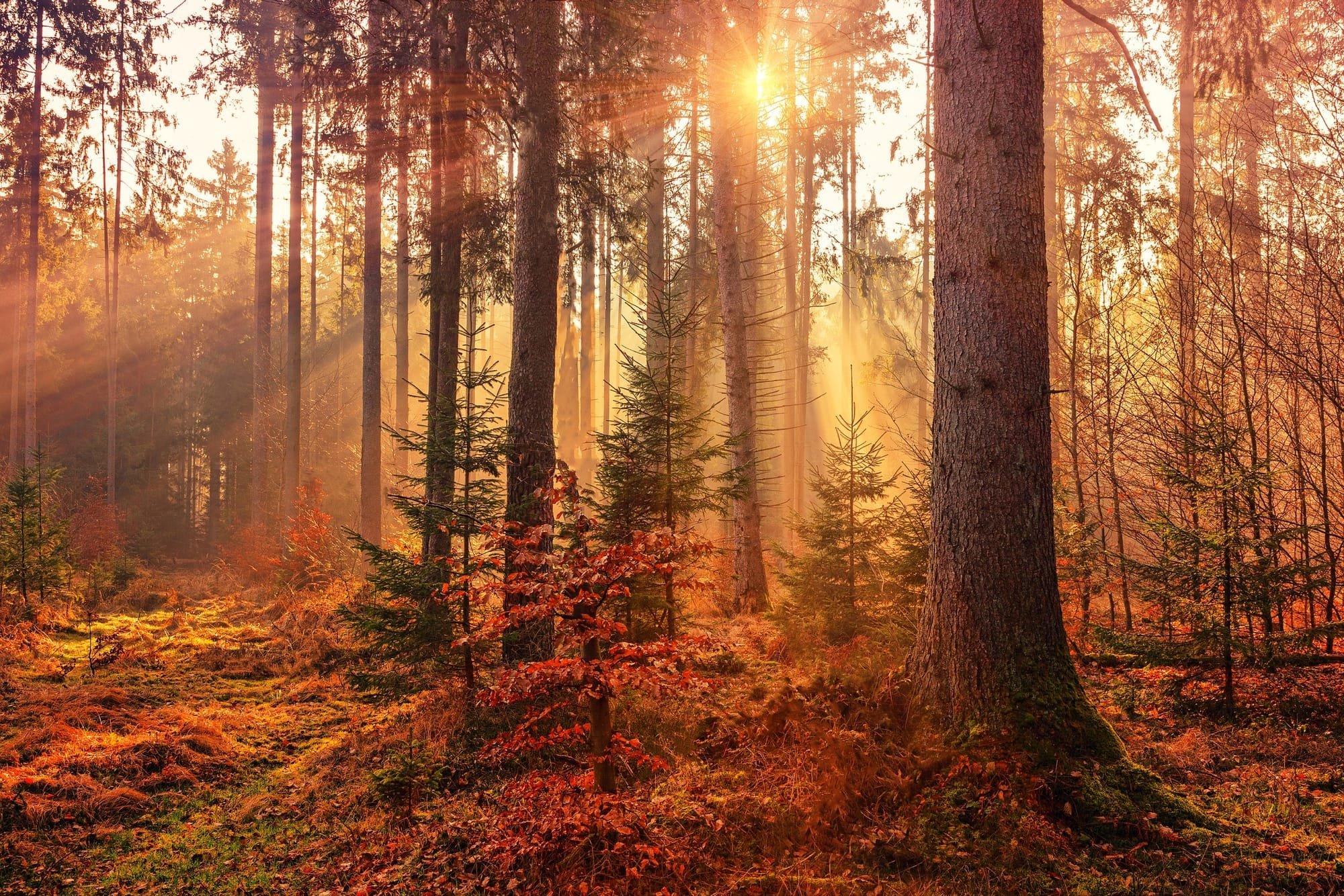 Balade en forêt en automne -divareiki